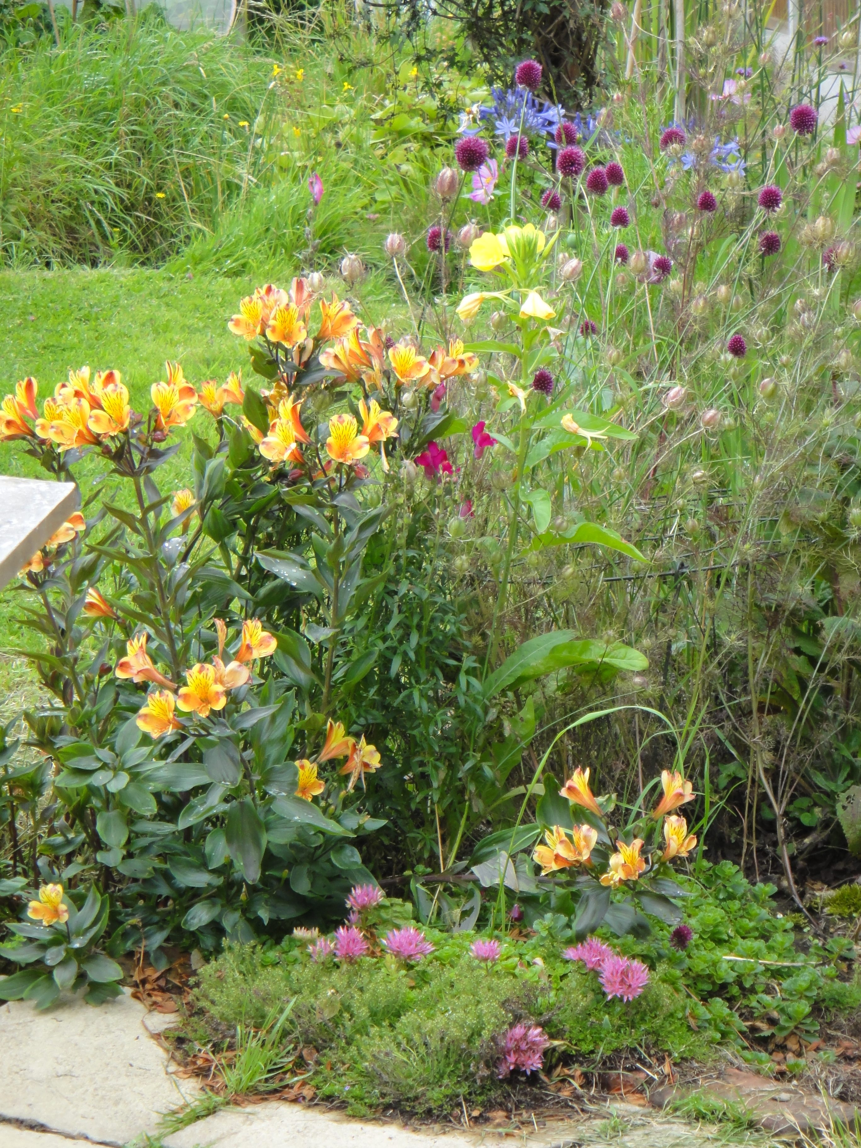 border of flowers by the patio