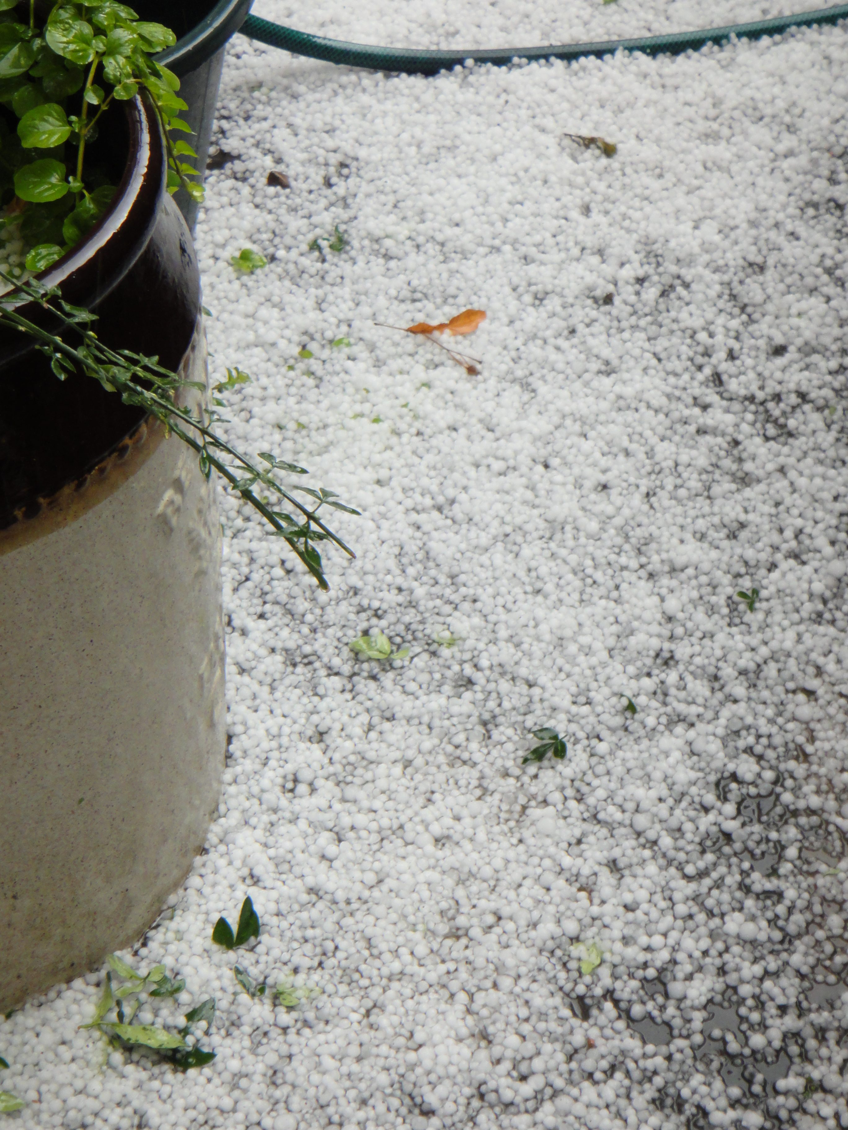 hail on ground by French window