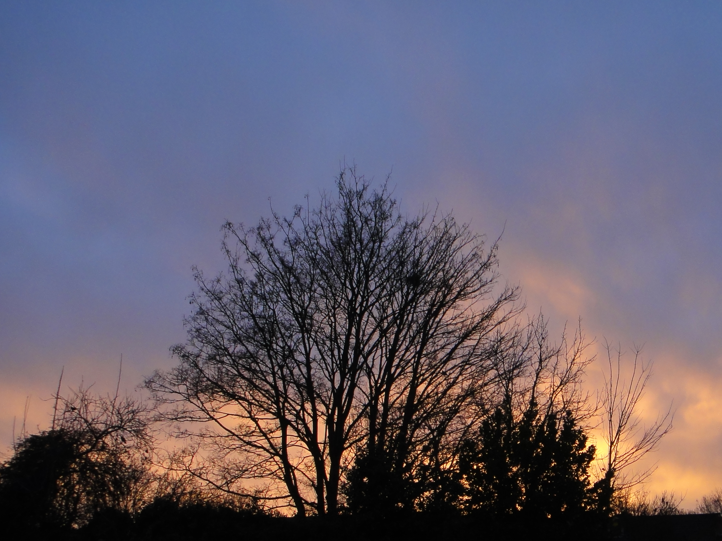 sunset with leafless trees, from back garden