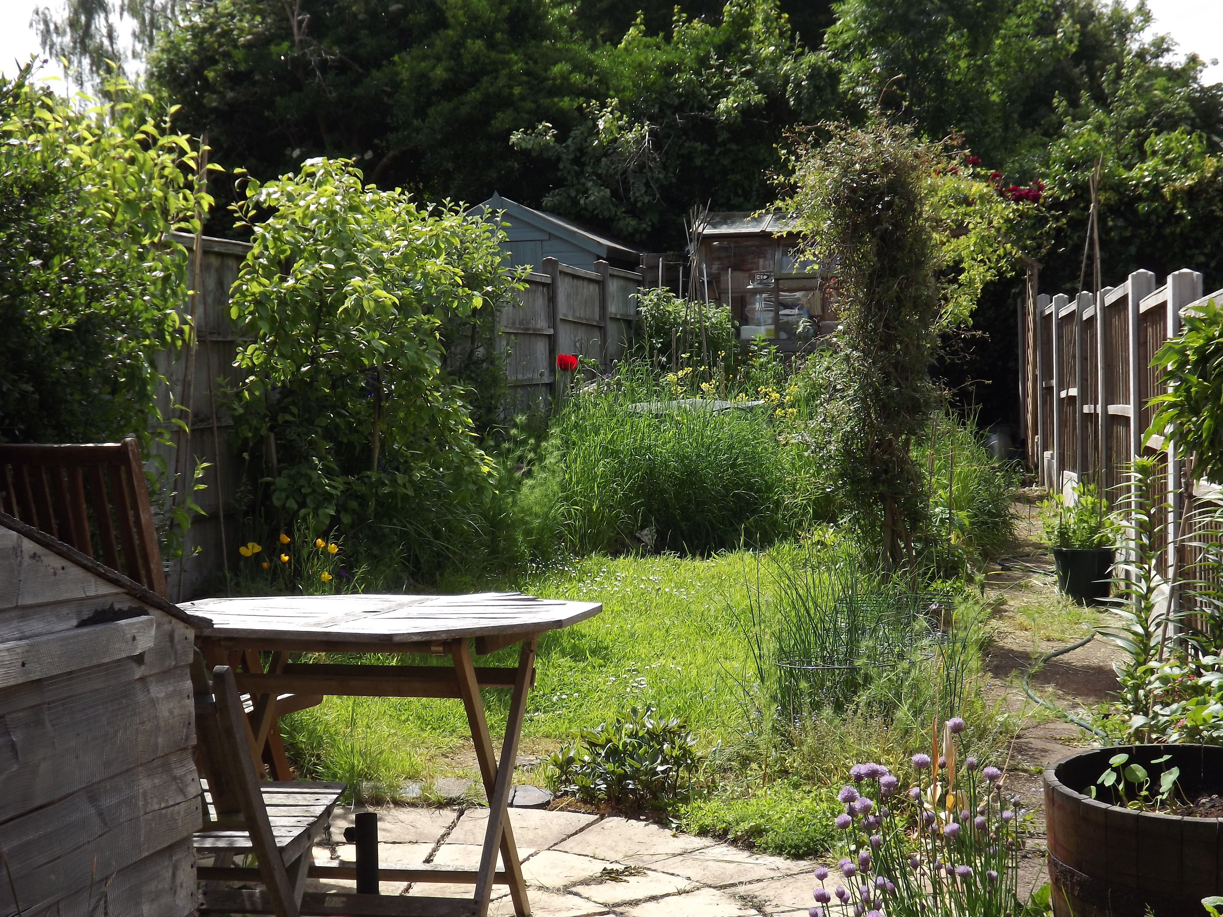 garden view with distant poppy