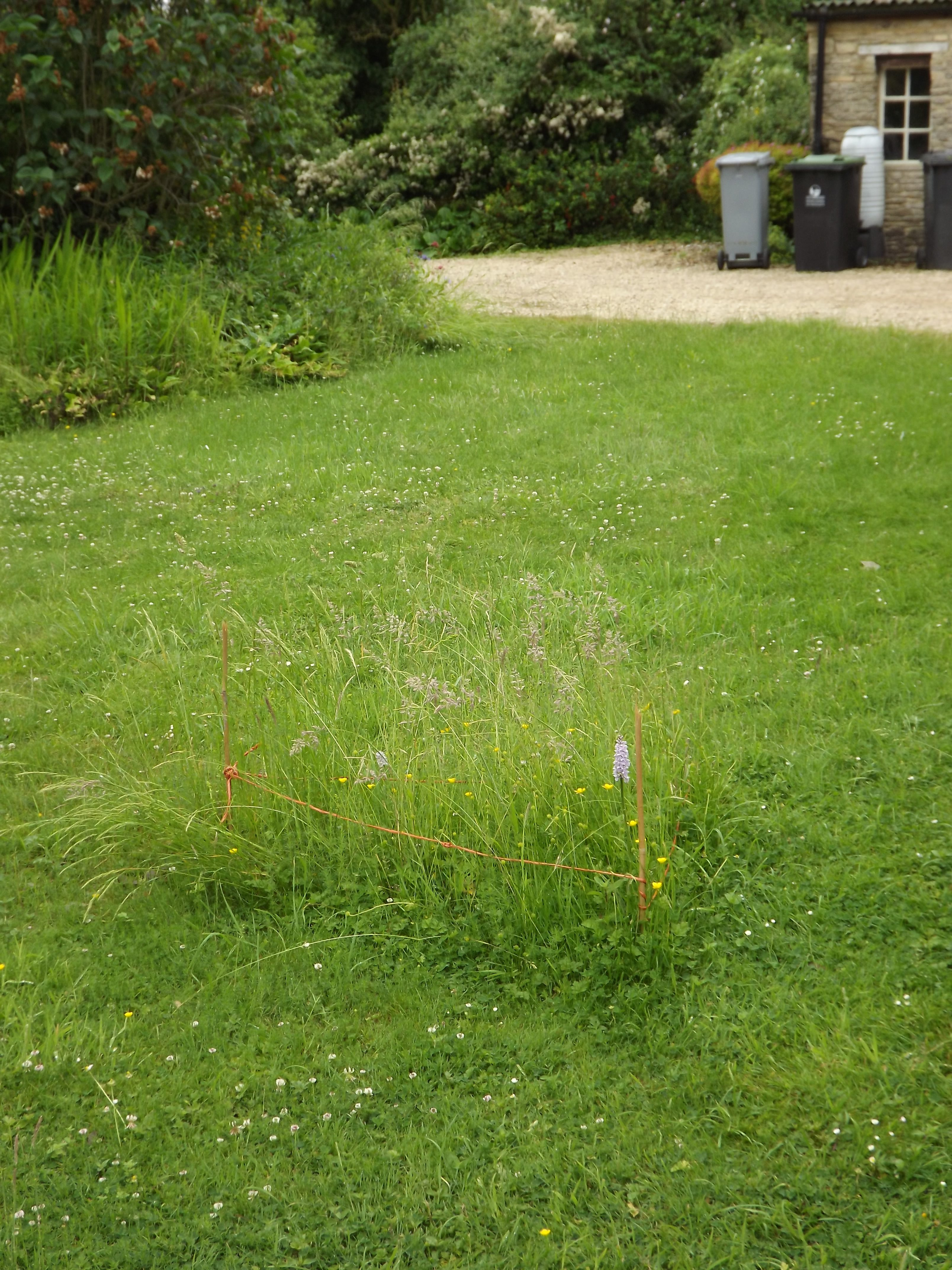 marked-out bit on front lawn, with orchid