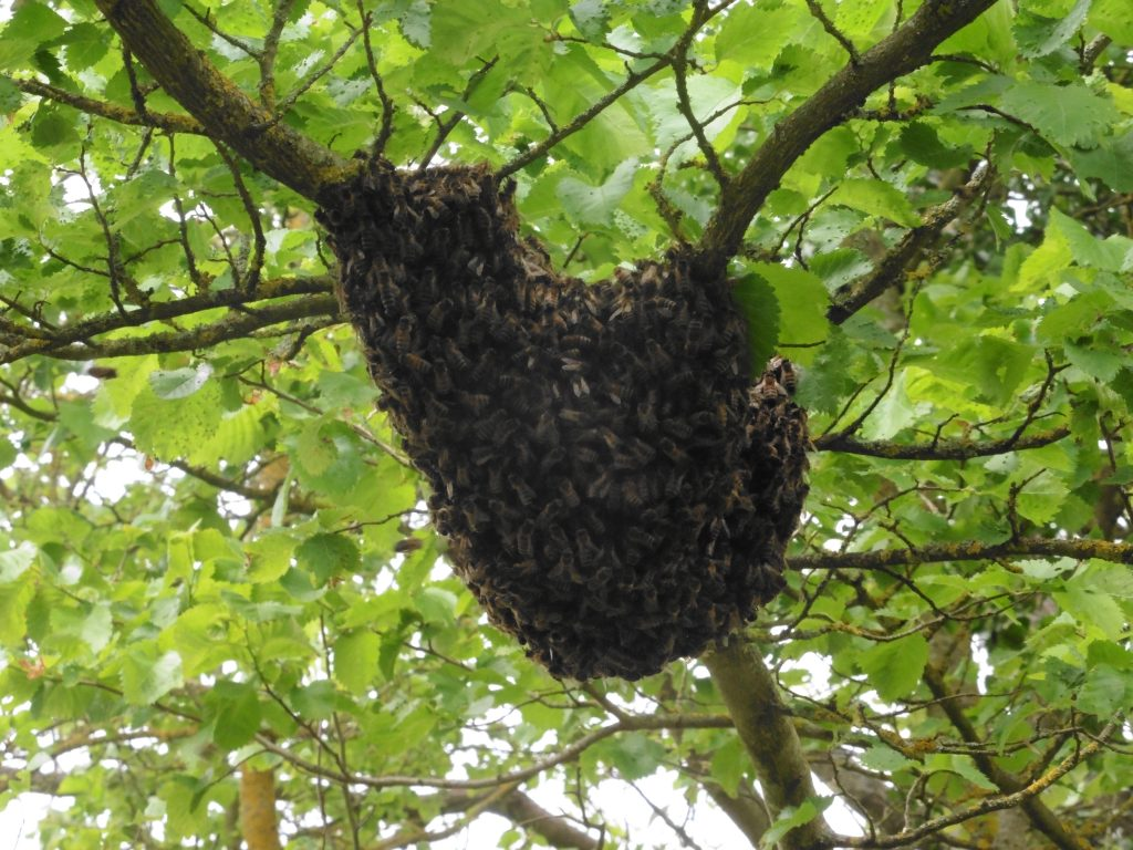 swarm of bees (still pic)