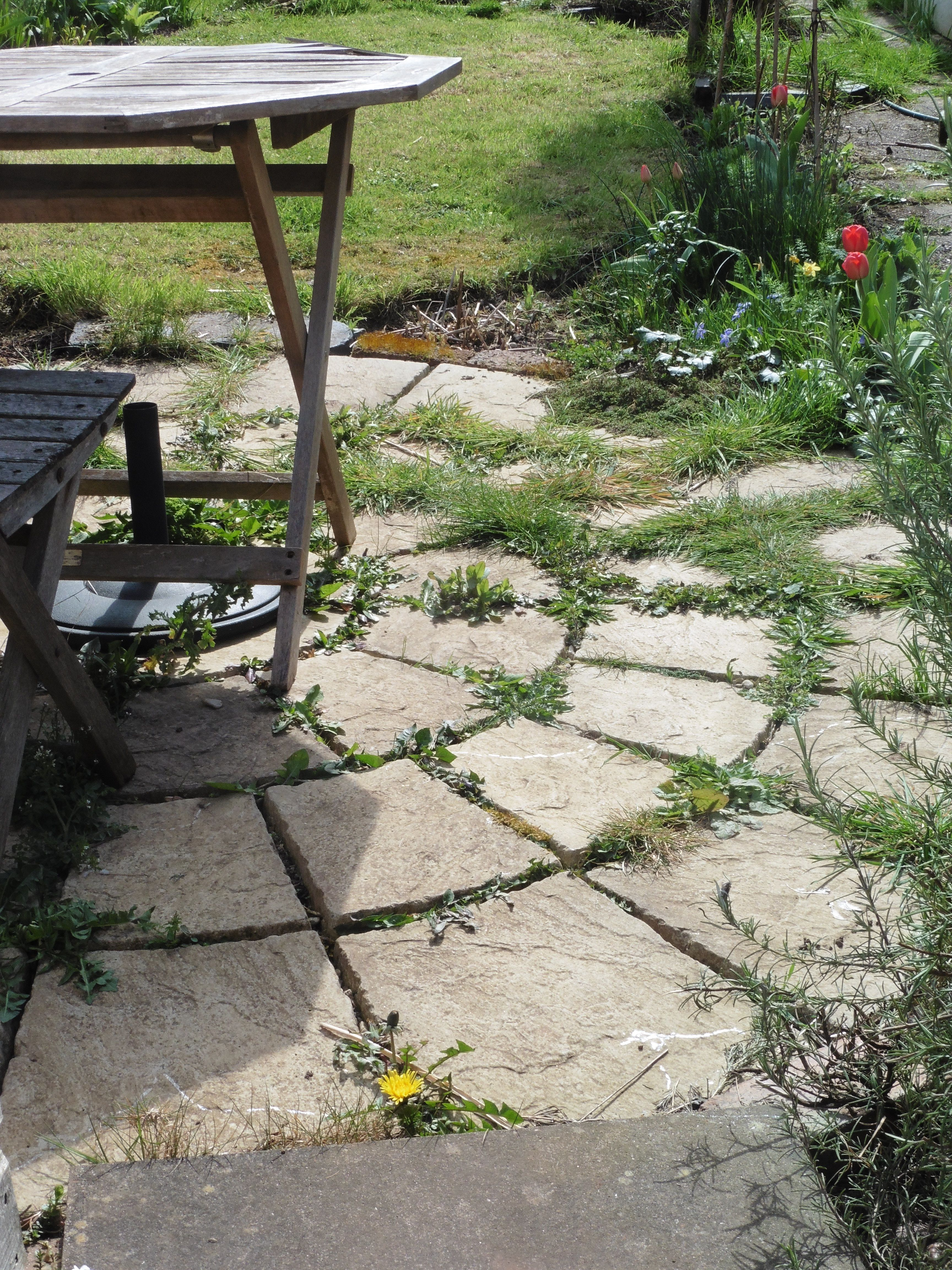 patio, with weeds