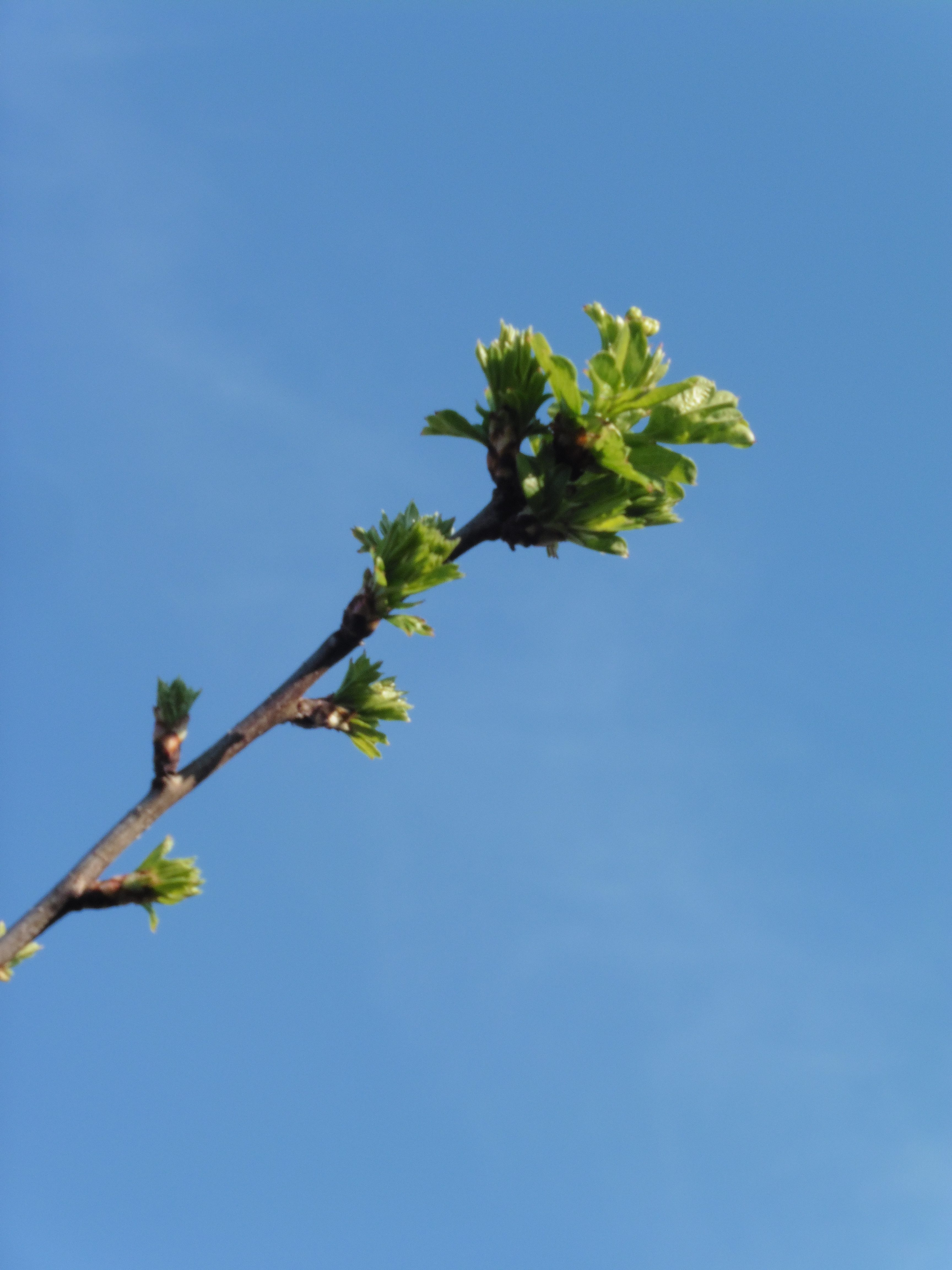 flowerbuds and leaves against blue sky
